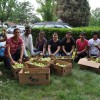 Volunteer with Mississauga Fruit Tree!